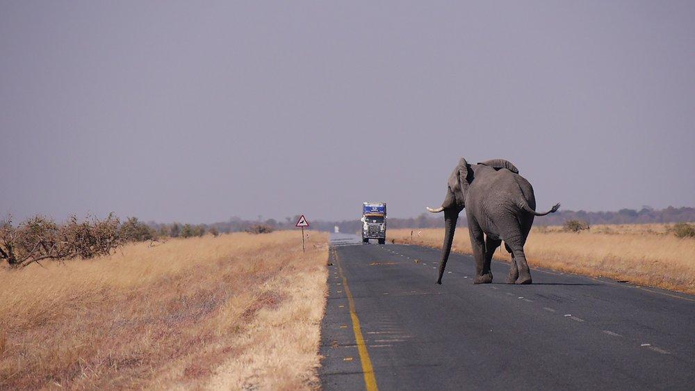 elebotswana-1653101_1920.jpg