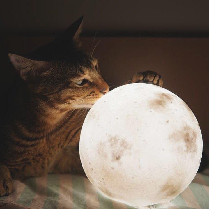 #lunalamp #月球燈luna #月亮燈#acornartstudio  photo by @kraft_mocha_amber