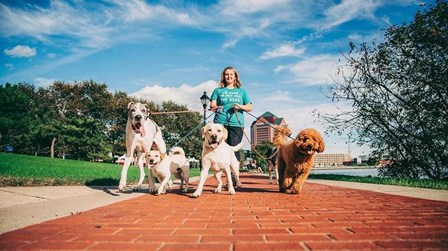 #squadgoals !!! I kicked off my super busy and fantastic weekend with a branding session for @dogsofcharmcity !! I got to hang out with @puprincessleia, @pippa_thegreat and @franklintheaussie! Follow them all on IG for doggie adventures!  #bossbabe #dogsofcharmcity #photographyeveryday #cantonwaterfront #maryland #baltimore #communityovercompetition #smallbusiness #marylandphotographer #baltimorephotographer #bmorecreatives #dogsofinstagram #dogwalker