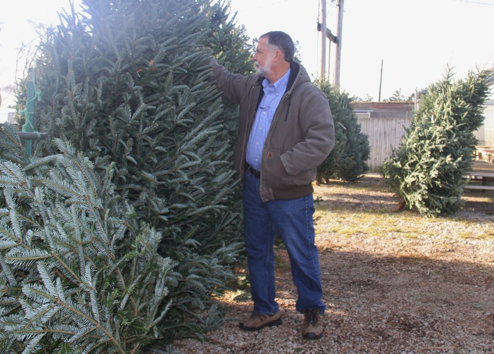 U of I Extension educator Richard Hentschel considers a Christmas tree