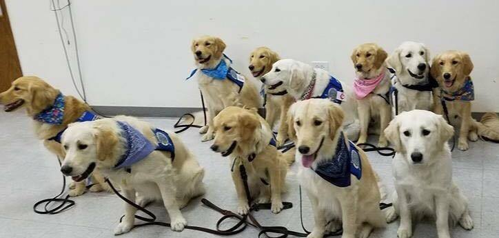 LCC Comfort Dogs (photo courtesy of Lutheran Church Charities)