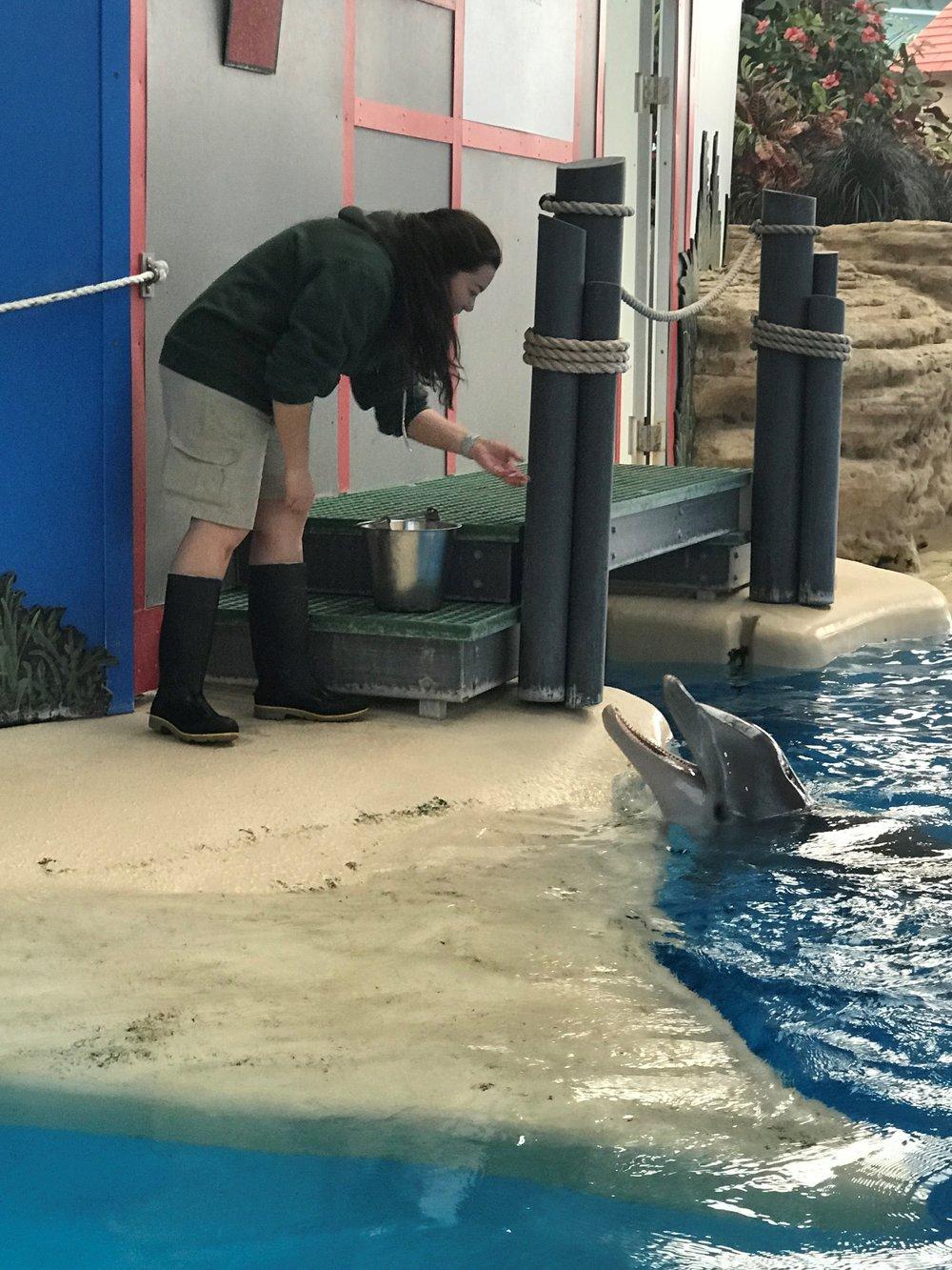 Dolphin-3.jpg