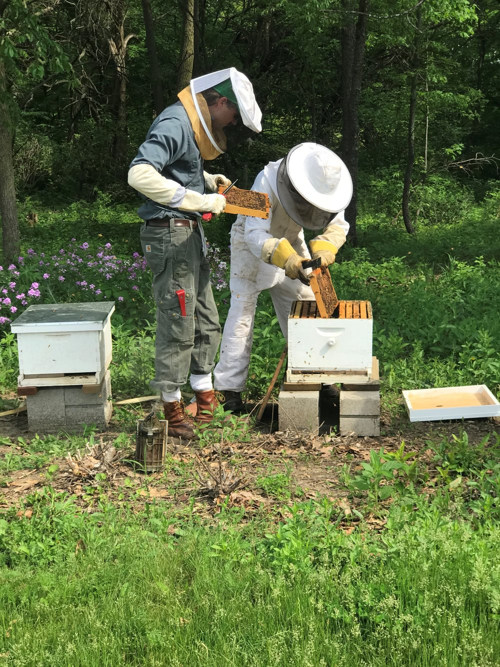 COD Prairie Manager Remic Ensweiler (left) and Wheaton's Mike Bock (right) work to maintain the honeybee hives at College of DuPage