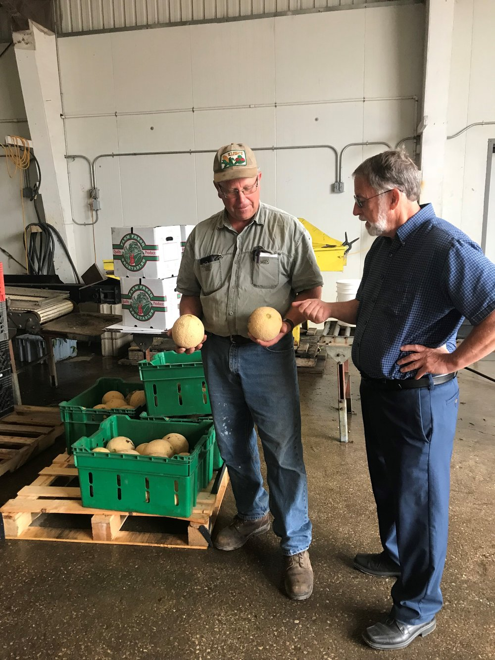 "Farmer Matt Klein (left) and University of Illinois Extension educator Richard Hentschel (right) inspect a pair of ""sugar cube"" melons picked from one of Matt's fields"