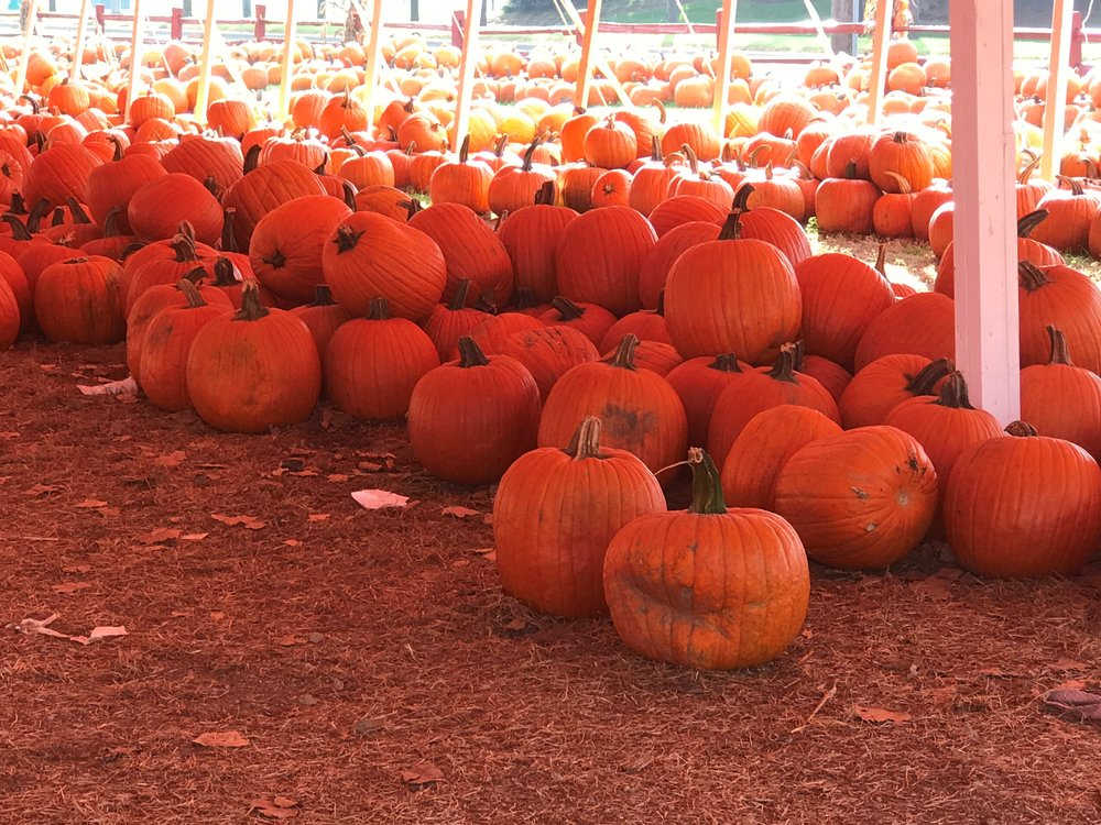 Plenty of pumpkins waiting to become jack-o-lanterns at Johansen Farms in Bolingbrook