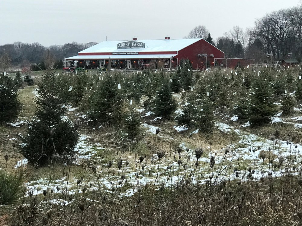 Abbey Farm in Aurora has acres and acres of trees at one of the few 'you cut' tree farms in the Chicago area.