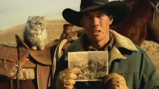 cat herder.jpg