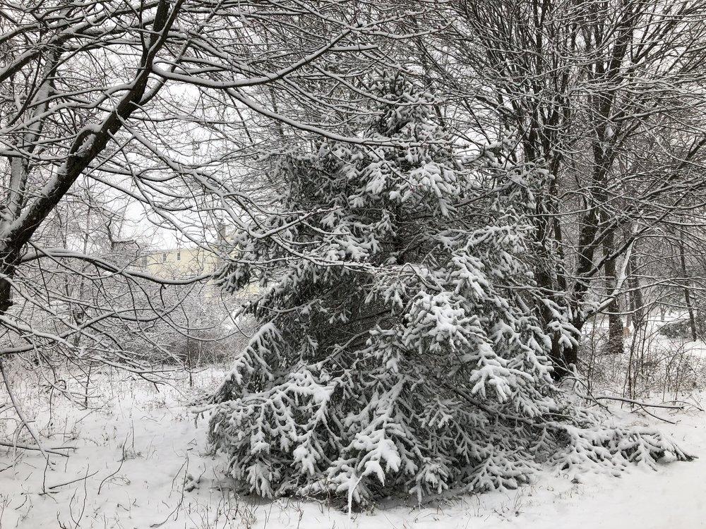 tree_snow.jpg