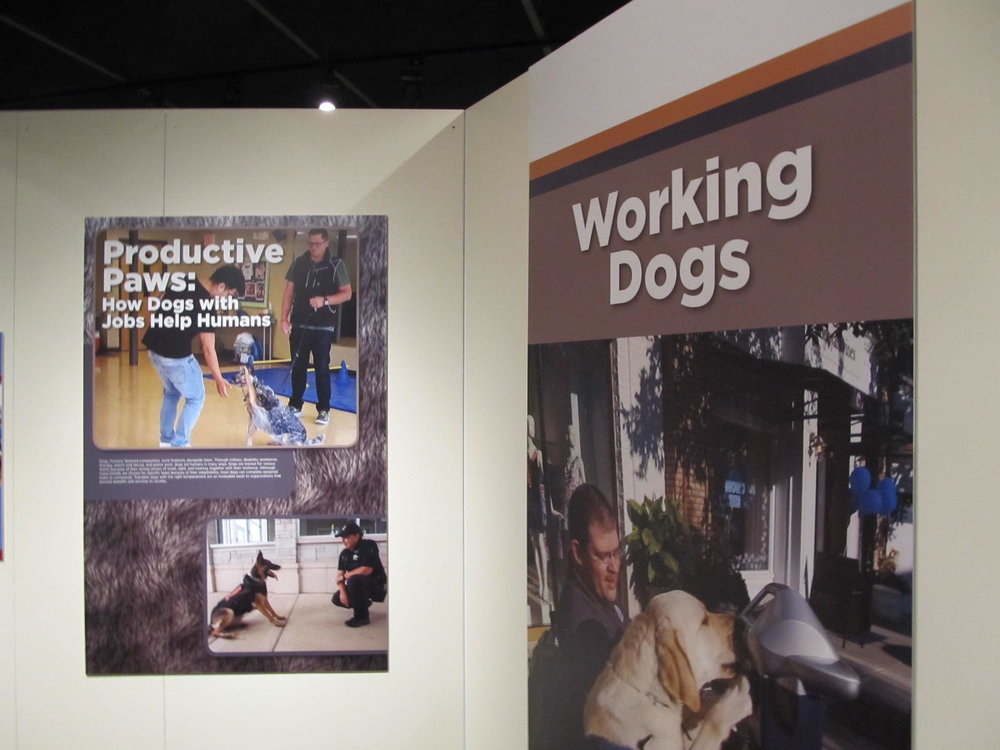 Posters highlight the stories of the different parts dogs play in our society  (photo courtesy of Guy Stephens/WNIJ)