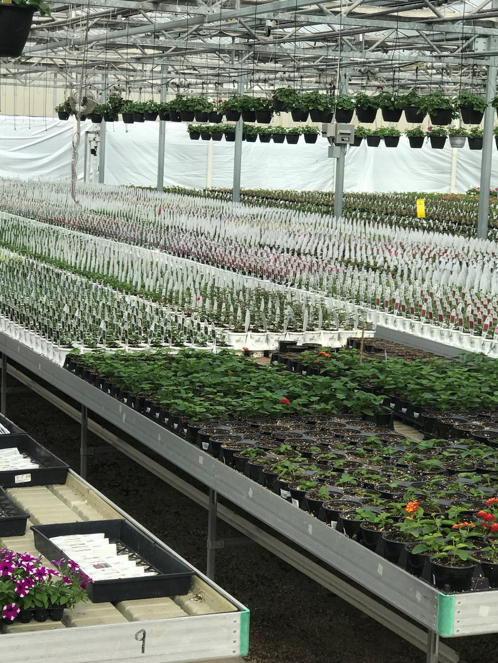 Rows and rows of tables with a wide variety of flowers await gardeners and weather that's just a little bit warmer