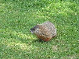 In the end the groundhog just laughed...