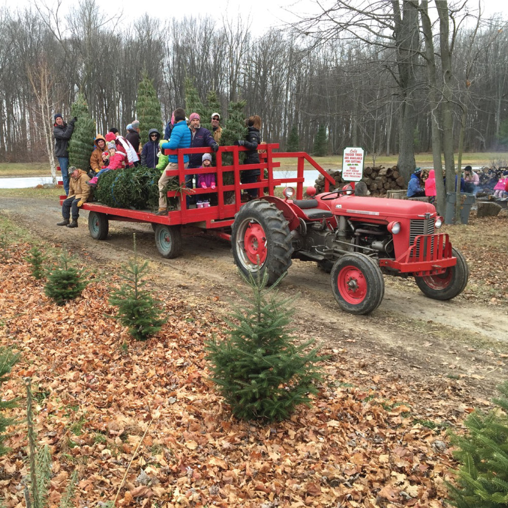 HOP ABOARD - Hop on one of our wagons and get ready to find your tree.