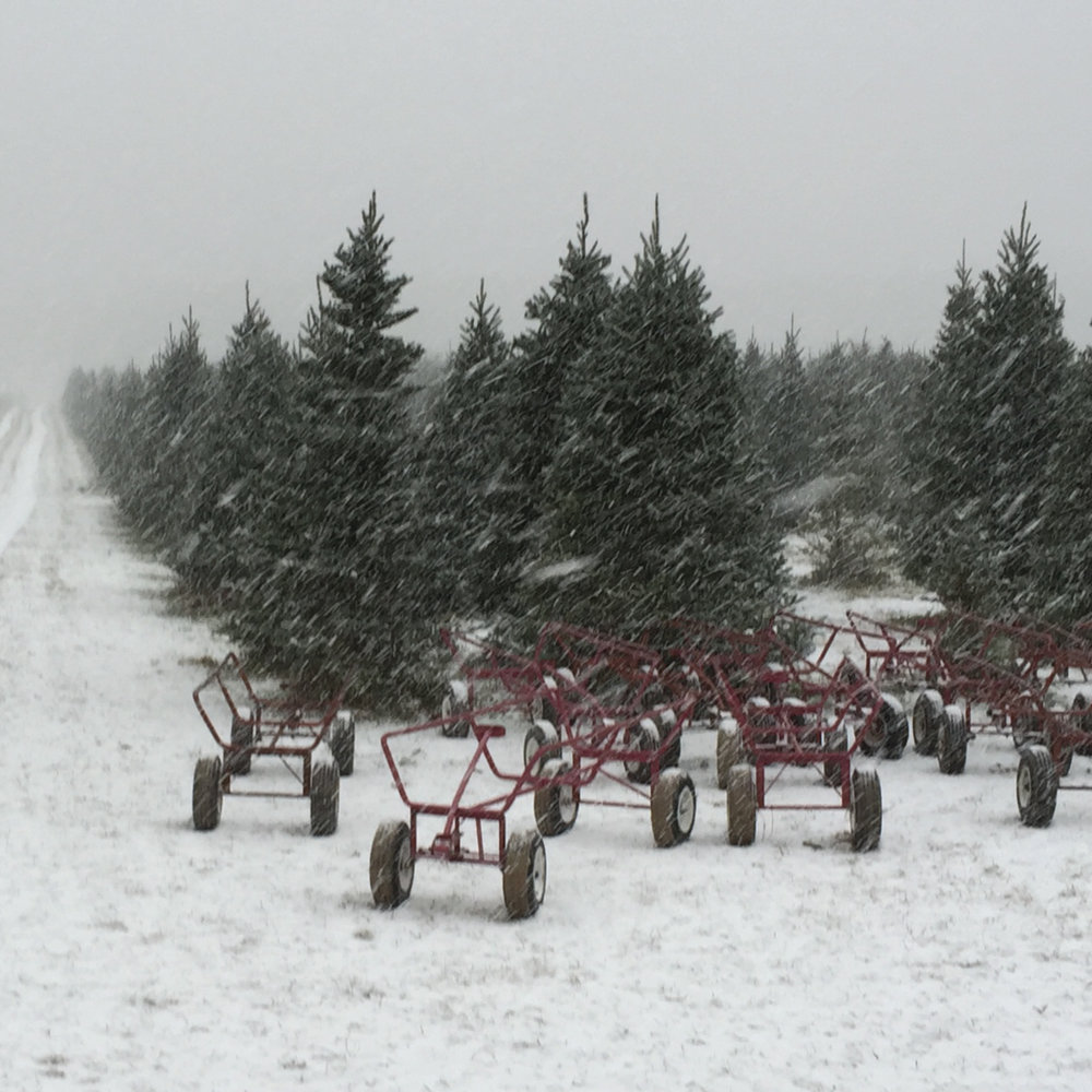 TAKE IT WITH YOU - Place your tree on one of our tree carts.