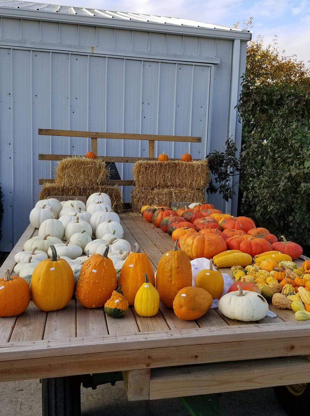 Pumpkin wagon 2018.jpg