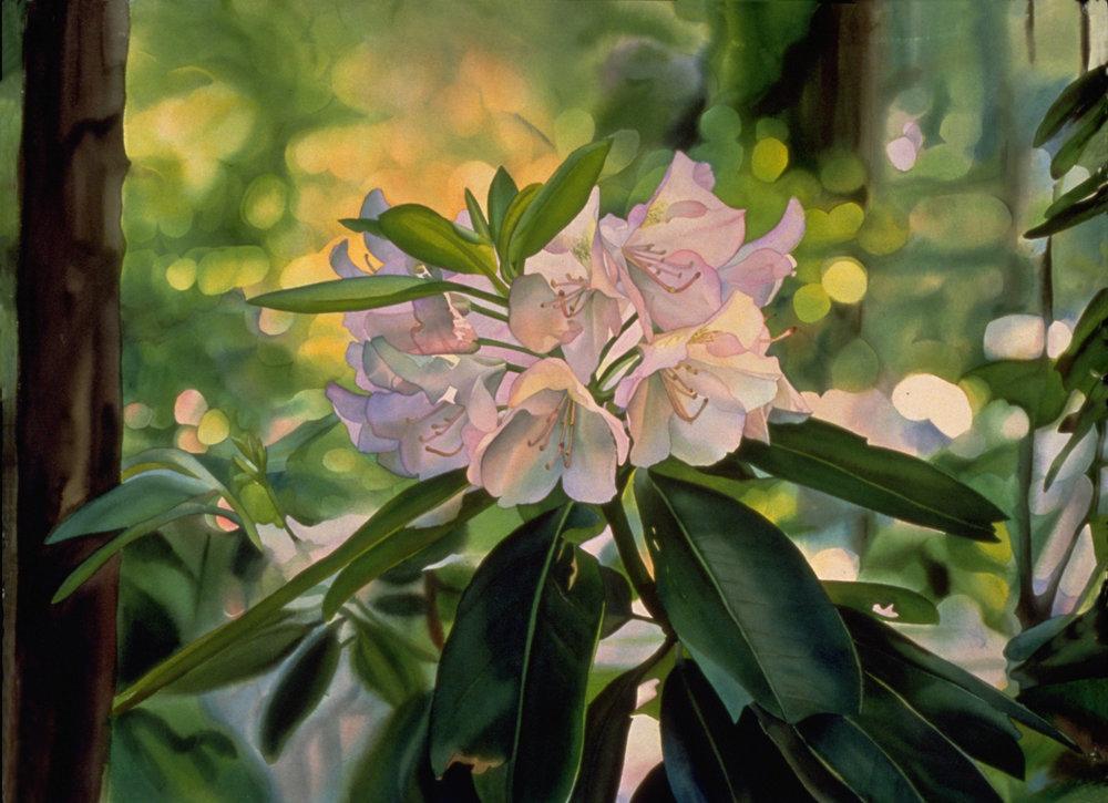 Forest Rhododendrum