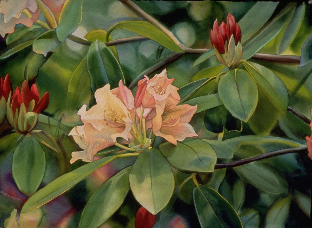 Elizabeth's Rhododenrum