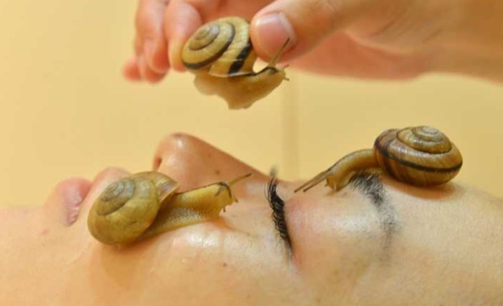 Snail facials: anti-ageing cure extrordinaire