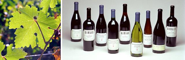 All_wines-2.jpg
