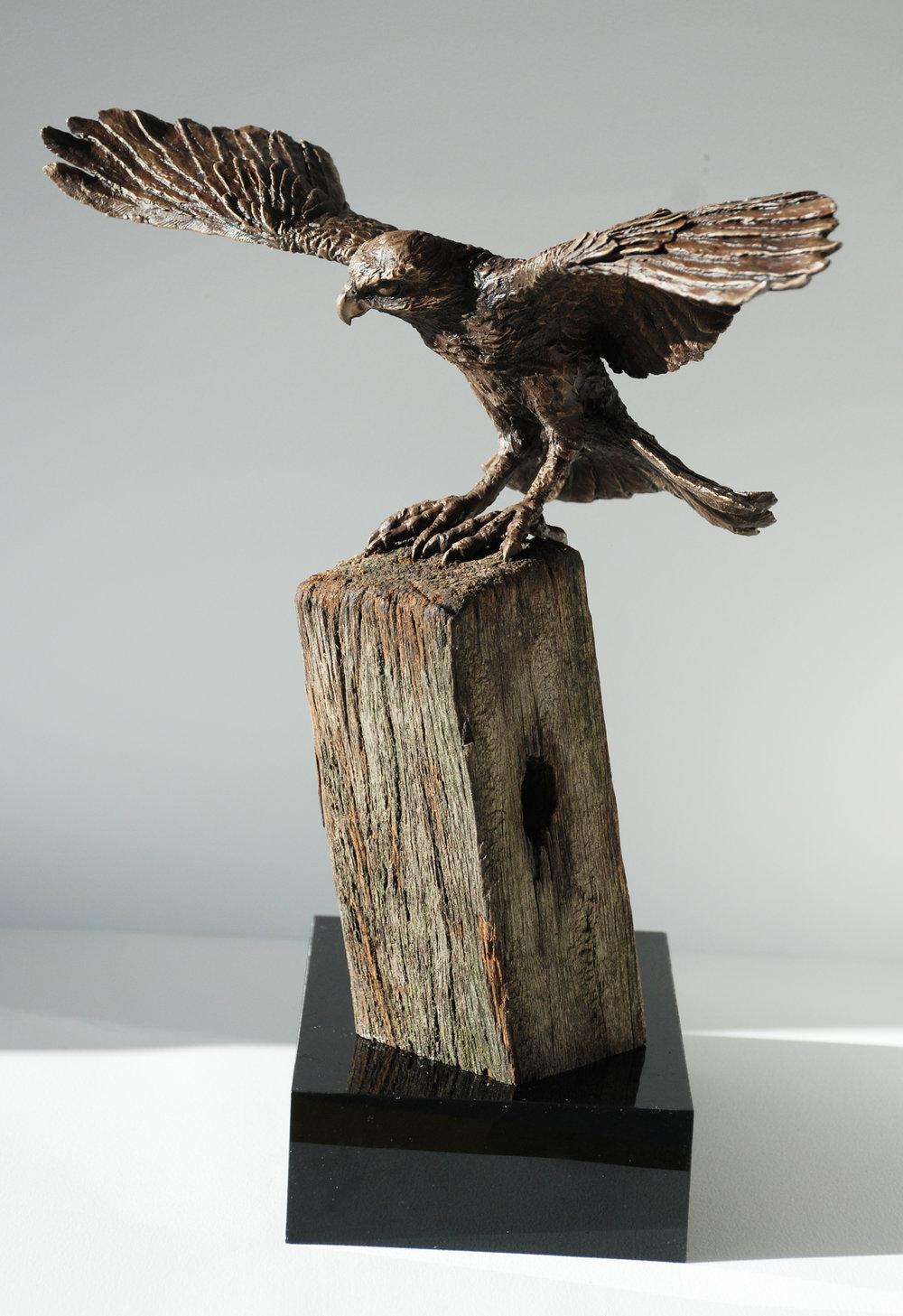 NZ Falcon.jpg