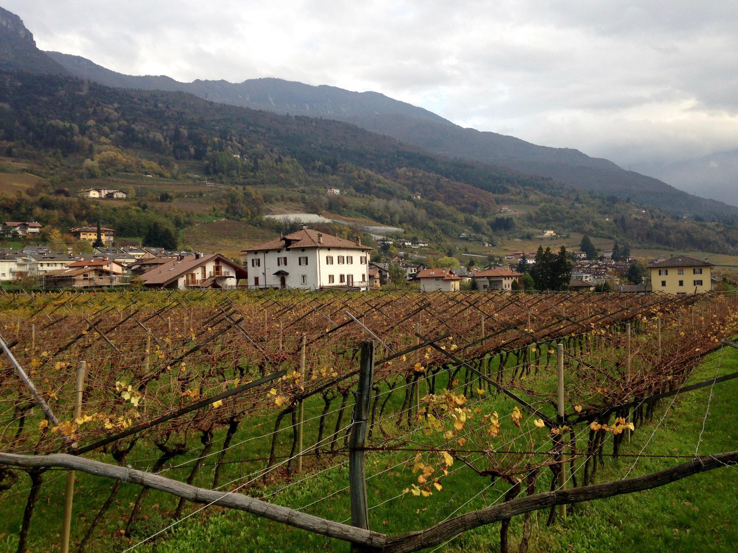 italian vineyard trento