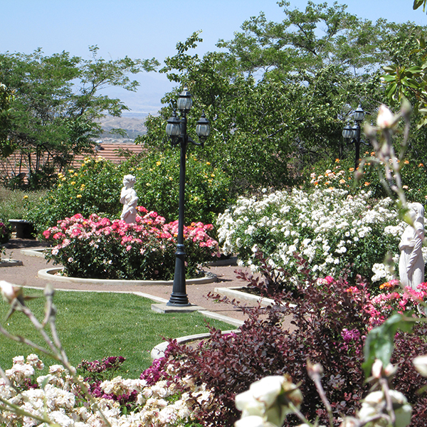 rose garden in April 1.jpg