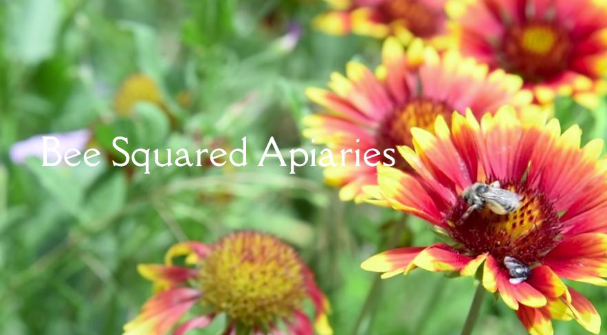 Bee Squared Apiaries