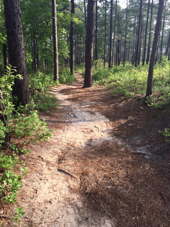 hike2.jpeg