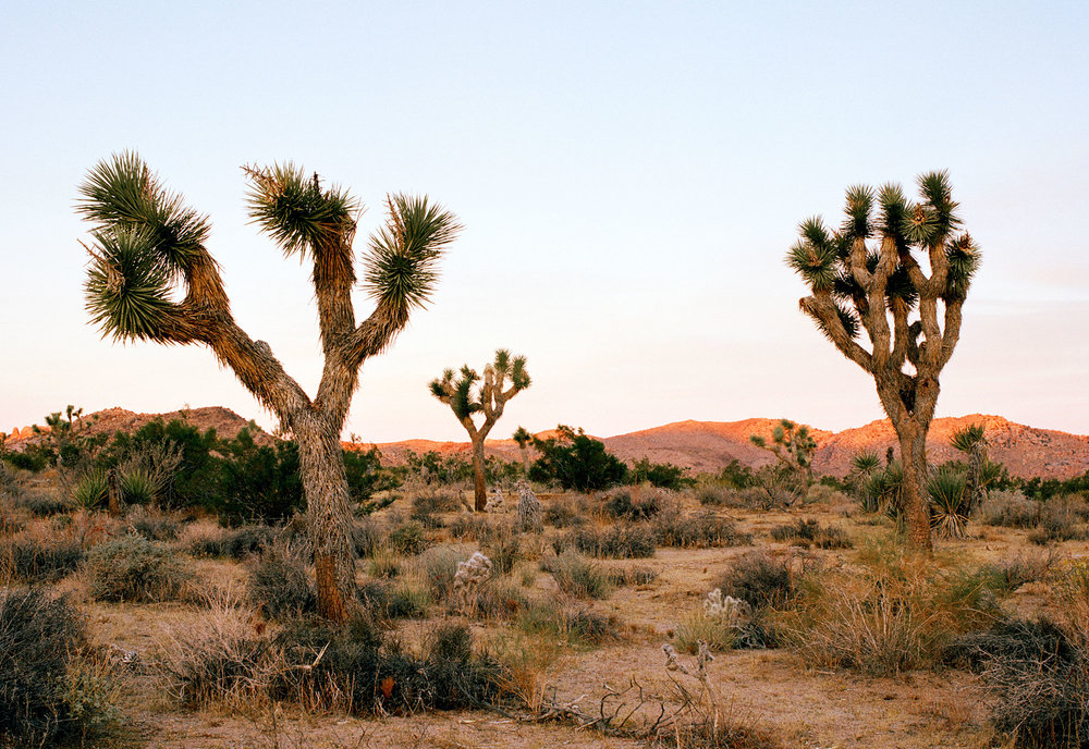 JOSHUA TREE - Thursday, November 1st - Sunday, November 4th