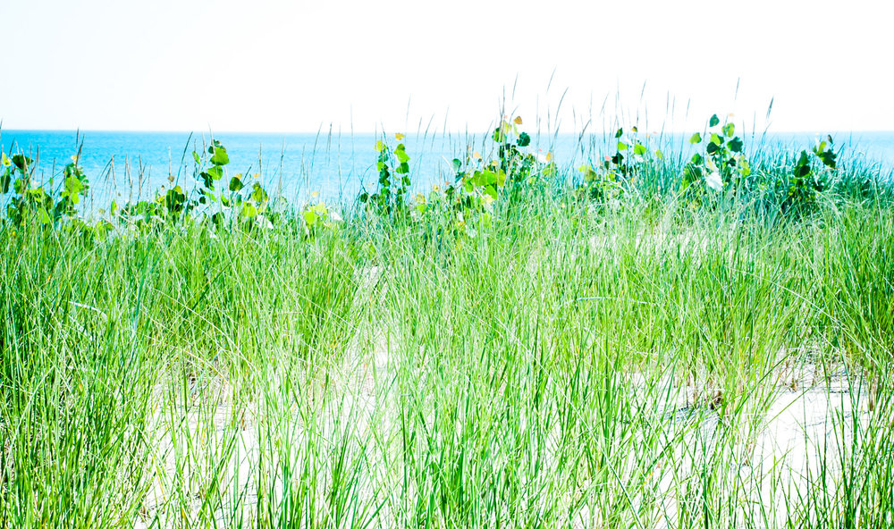 Beach Grass   Lake Michigan