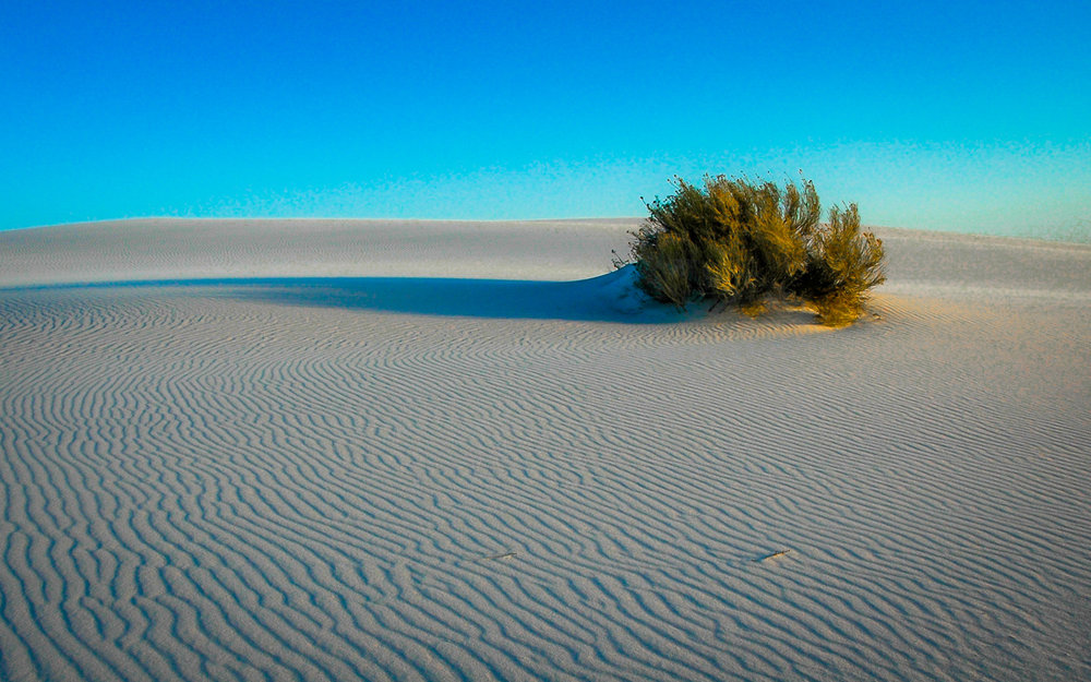 Lone Bush   White Sands National Monument, NM