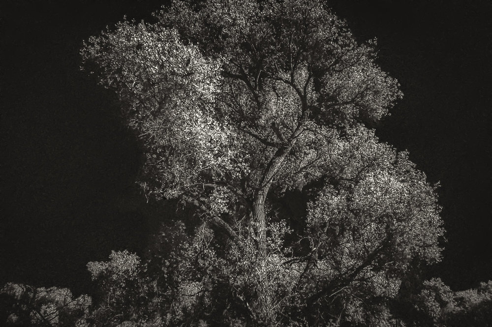Tree Light   Hassayampa River Preserve, AZ