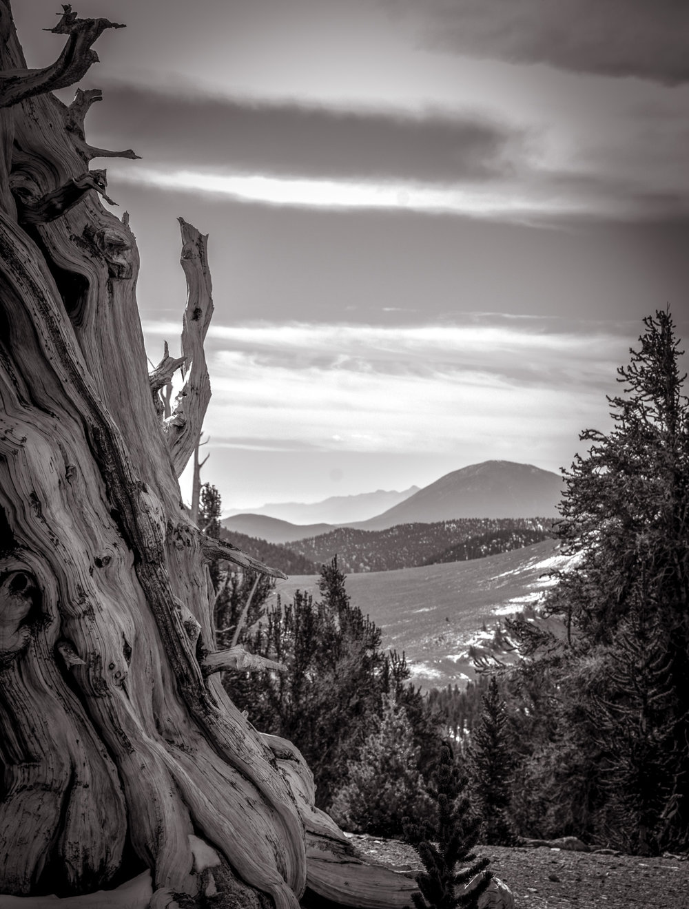 View From On Top  Bristlecone National Monument, CA