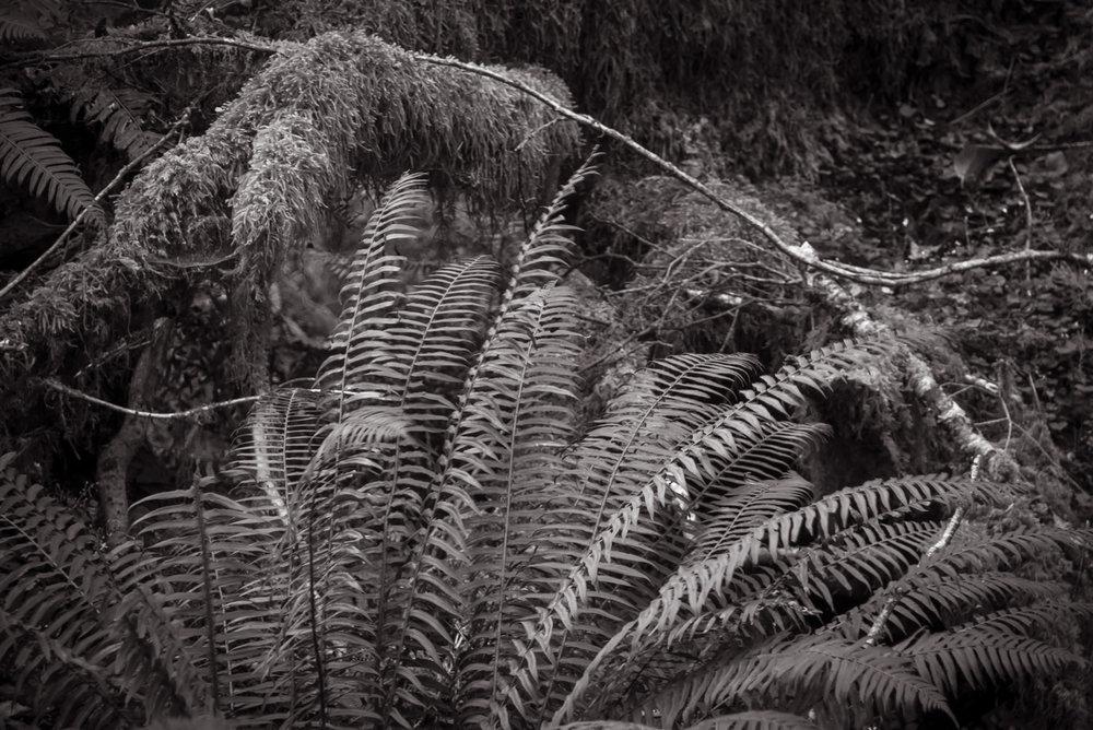Rain Forest  Oregon Coast