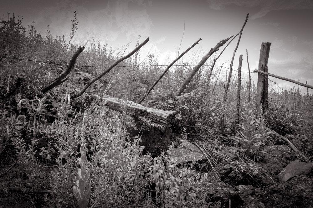 Leanings  Watson Woods, AZ