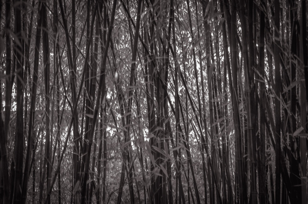 Bamboo Jungle   Victoria, BC