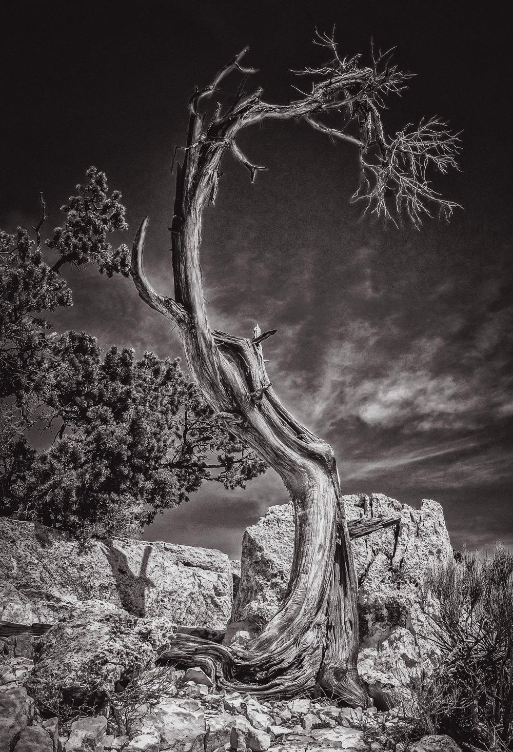 Graceful Curve  Grand Canyon National Park, AZ