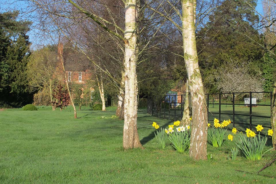 Copy of Daffodils