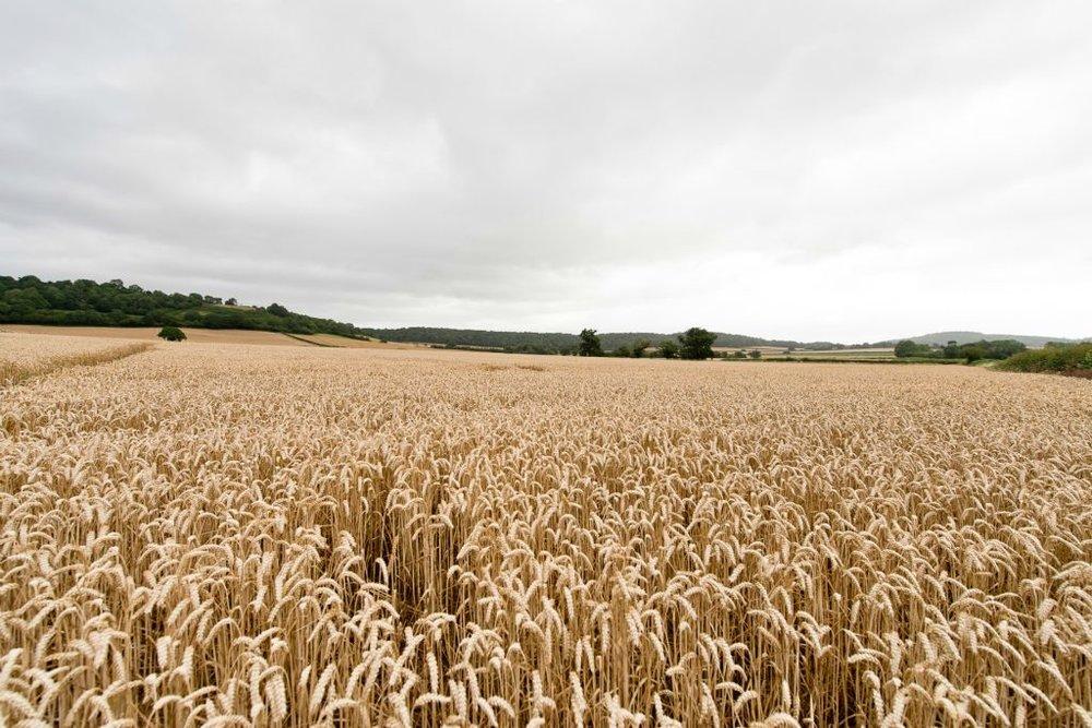 Copy of Fields
