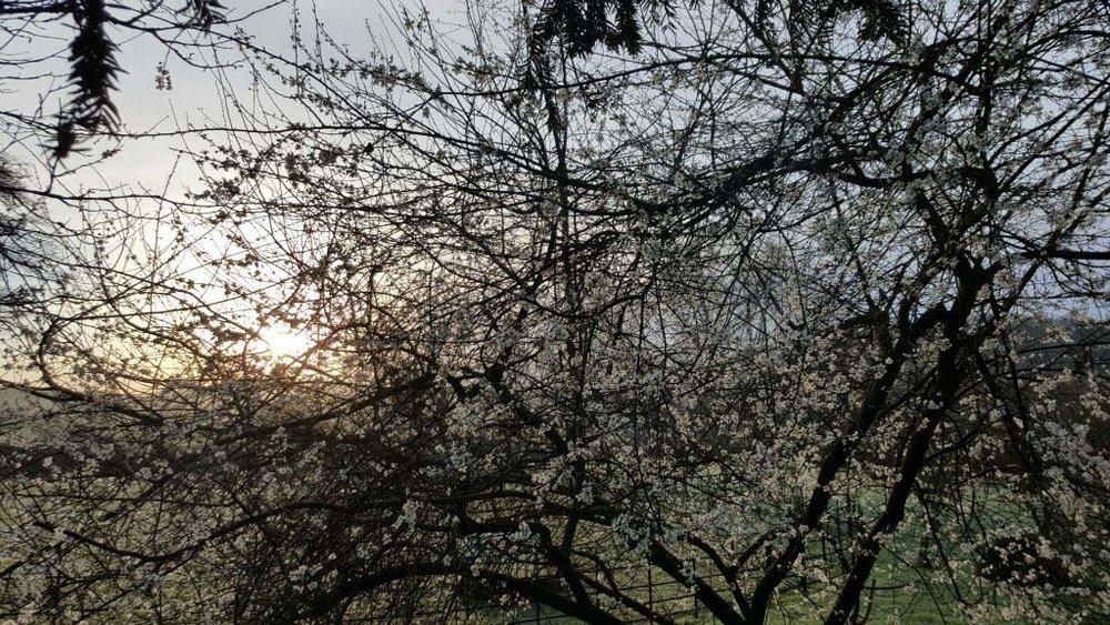 Copy of Blossom