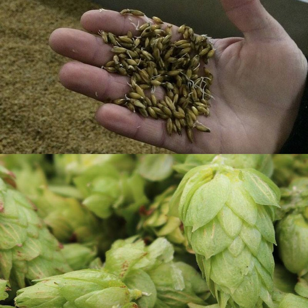 Grain and Hops.JPG