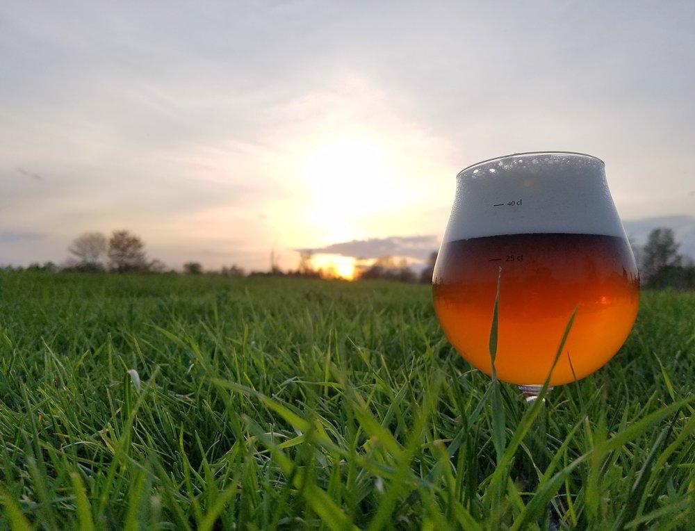 beeringrass.jpg
