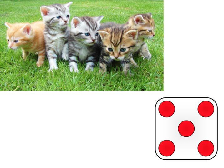 cat-dice.jpg