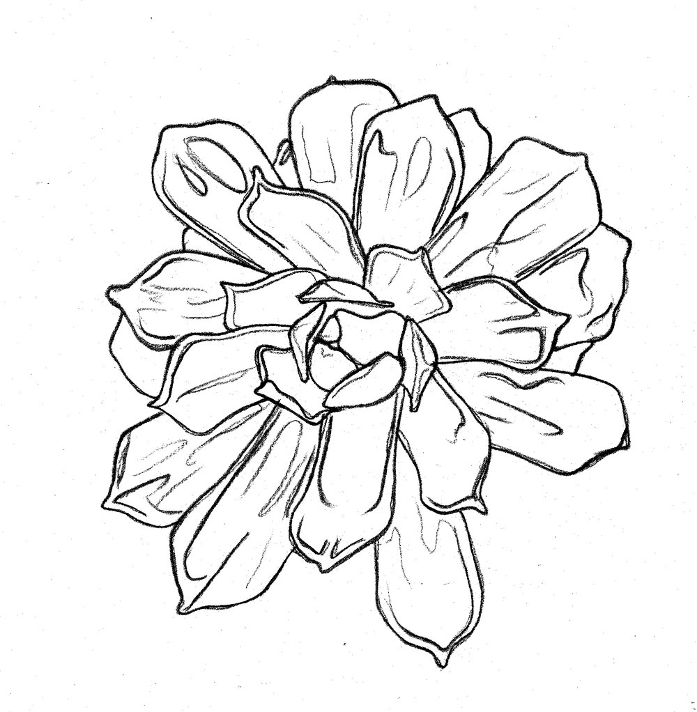 succulent2drawing.jpg