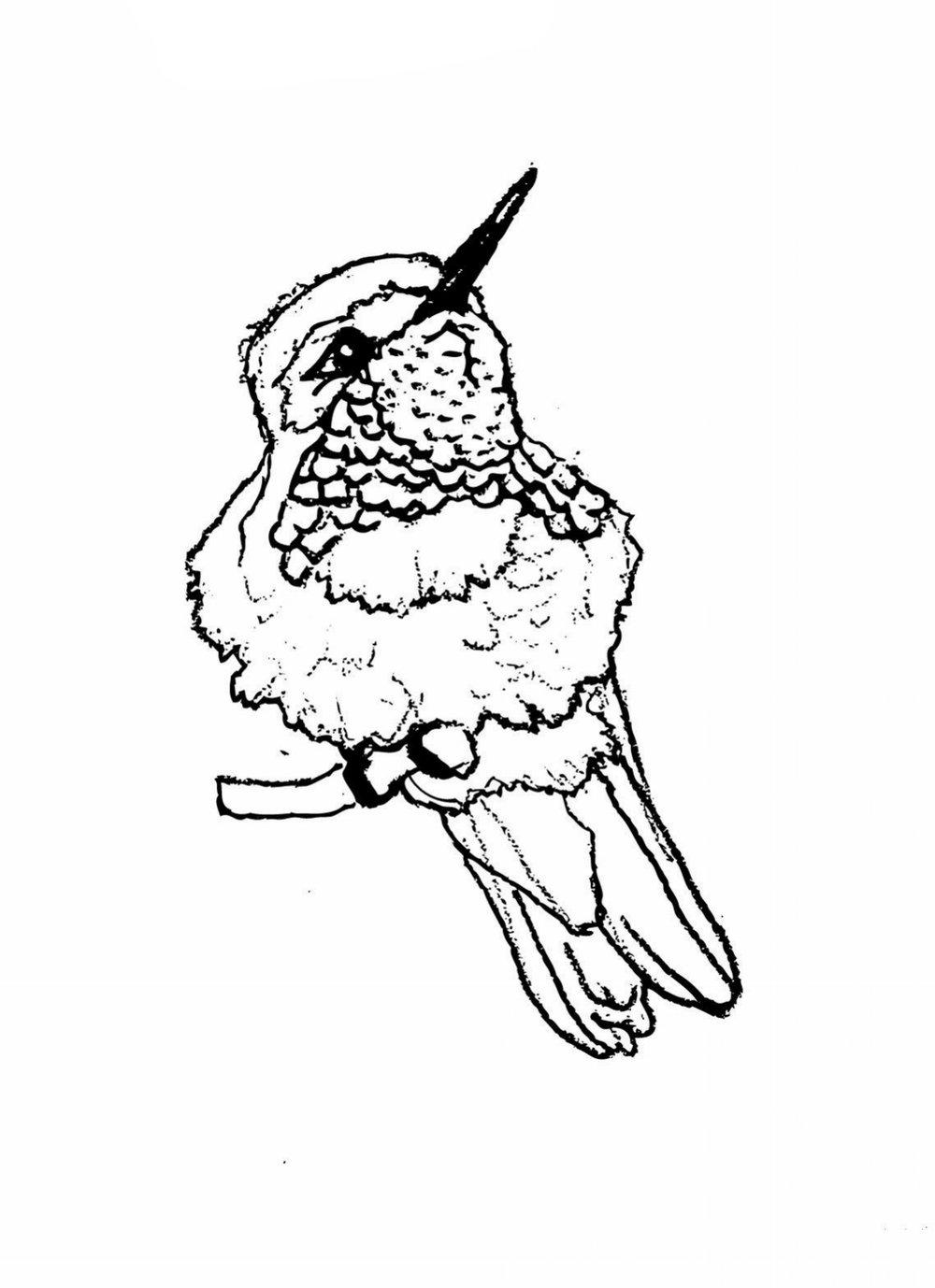 birdlayers.jpg