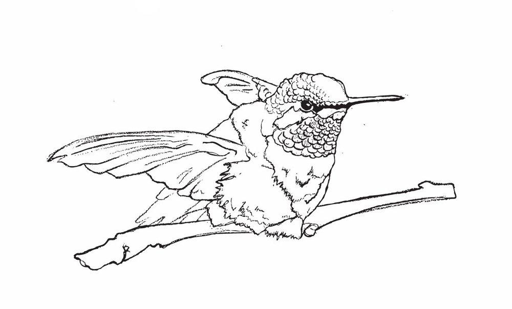 birdsketches.jpg