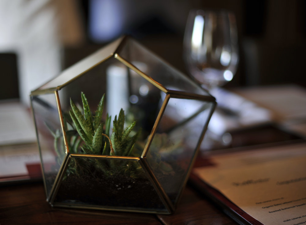 Succulent Center Piece