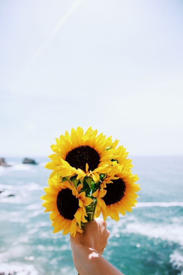 """""""May you grow so tall and bright, so free and wild, so brave and vibrant like a sunflower."""""""