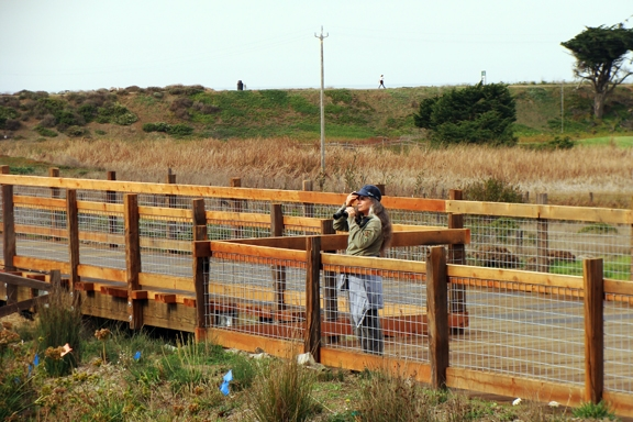 Mori Point - Boardwalk through Sensitive Habitat