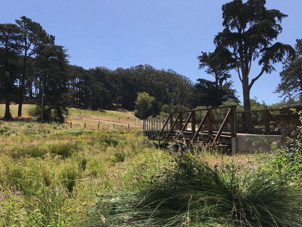 Macarthur meadow BWALK - 8.jpg
