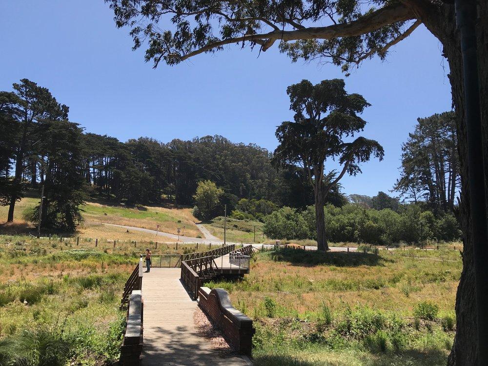 Macarthur meadow BWALK - 12.jpg